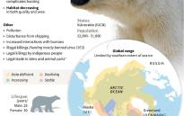 Factfile on polar bears, whose survival is threatened by global warming and related threats. Picture: AFP