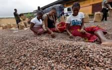 Women sort cocoa beans at a cocoa exporter's in Abidjan, Ghana on 3 July 2019. Picture: AFP