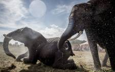 Elephants of the Arene circus are being hosed down by local firefighters due to high temperatures on 2 August 2018 in Gilleleje, Denmark. Picture: AFP