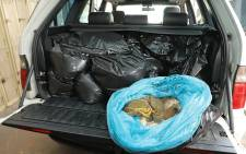 Police spotting the vehicle following a tip-off and they uncovered plastic bags filled with shucked abalone inside it. Picture: SAPS.