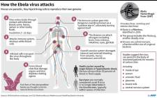 A fact file on how the Ebola virus attacks. Picture: AFP