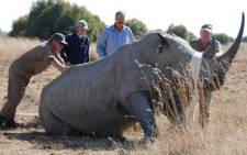 Rhino, victims of poaching syndicates in South Africa. Picture: EWN