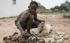 A file picture showing a 13-year-old Prince Mpofu packing last years harvest from the irrigated gardens for storage in the village of Nsezi in Matabeleland, southwestern Zimbabwe. Picture: AFP.