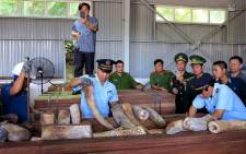This picture released by Vietnam News Agency on 28 March 2019 shows Vietnamese customs officials inspecting seized suspected ivory inside a timber shipment in a warehouse in Danang. Picture: AFP