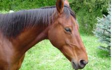 The man reportedly tried to board two trains in the state of Styer with his horse named Frieda.