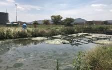 The Moses Kotane Hospital's sewage treatment plant near a local stream in Ledig, North West. Picture: Masechaba Sefularo/EWN