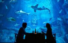 The room with the view at the Paris Aquarium. Picture: airbnb.com