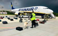 A Belarusian dog handler checks luggages off a Ryanair Boeing 737-8AS (flight number FR4978) parked on Minsk International Airport's apron in Minsk, on 23 May 2021. Picture: AFP