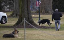 FILE: The Biden's dogs Champ and Major are seen on the South Lawn of the White House in Washington, DC, on 25 January 2021. Picture: AFP