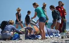 Volunteers drape wet towels over one of the 19 beached pilot whales at Noordhoek beach in Cape Town on 24 March 2013. Picture: Aletta Gardner/EWN