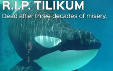 PETA posted a an image of Tilikum, on their Twitter saying the killer whale 'died after decades of misery'. Picture: Twitter/@peta