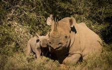 Picture: Shamwari Safari Facebook page