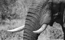 FILE: An elephant in Zimbabwe's Hwange National Park. Picture: www.zimparks.org.