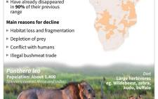 Factfile on African lions, which are at risk of extinction and will be protected under US law as an endangered species.