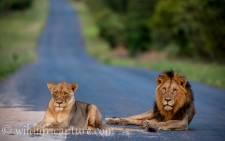 The Western Pride Lion, Skye. Source: Charlie Lynam