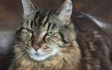 FILE: Screengrab of Corduroy, the world's oldest cat. Picture: Guinness World Records via Youtube.