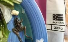 A dead frog found in Woolworths salad. Picture: Dirk Steenekamp @Dirk_Steenekamp.