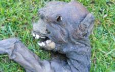 Vets have confirmed that the creature found in the Garden Route town is not an alien.