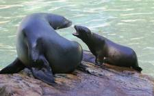 A woman sneaked into the seal pool of Berlin Zoo on Monday night, risking serious injury to take a swim with the animals after closing time. Picture: AFP.