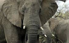 Five more people have been arrested for poisoning elephants with cyanide in Zimbabwe.