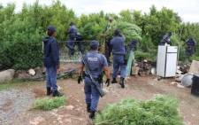 Two suspects were arrested in Ncweng Village outside Kuruman after police uncovered dagga plantations in their yards. Picture: SAPS.