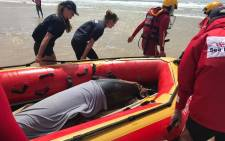 A 2.5m Striped dolphin has been successfully released approx 3km offshore. NSRI Jeffrey's Bay, Kouga Municipal lifeguards, a marine doctor from Bayworld, a vet from Cape Cross and members of the public assisted. Picture: SeaRescue/Facebook