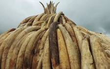 FILE: Ivory seized in Kenya. Picture: Supplied.
