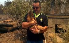 City of Cape Town officials managed to rescue a baby springbok while battling a blaze in the Helderberg region. Picture: @CityofCT