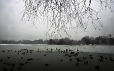 Ducks and geese are viewed at a lake in Brooklyn's Prospect Park following an evening storm on 24 January, 2015 in New York City. Picture: AFP.