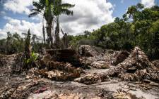 While illegal loggers are absent, forest guides armed with paddles or bows and arrows take the opportunity to inspect and destroy their makeshift village, consisting of about twenty huts, in the heart of the Vohibola forest near the village of Manambato, Madagascar, on 24 March 2019. Picture: AFP