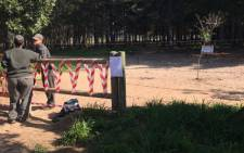 FILE: Felling of some trees in the Tokai and Cecilia plantation will begin today. Sections have been cordoned off. Picture: Monique Mortlock/EWN.