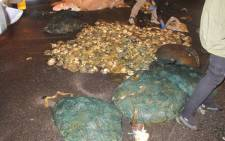 Joint operation by the police, and Cape Town Sea Border Unit led to the abalone bust at Hout Bay on 13 May, 2016. Picture: Twitter @SAPoliceService.