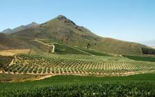 FILE: The Cape winelands. Picture: Dominic Morel/Freeimages