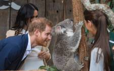 The Duke and Duchess met Rubi - mother of one of the Taronga Zoo's latest additions, a joey named Harry, during their visit to Australia on 16 October 2018. Picture: @KensingtonRoyal/Twitter.