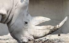 A rhino. Picture: pixabay.com