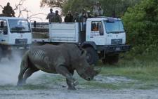 The first 10 rhinos were successfully released in April 2015. Picture: Beverly Joubert/Rhinos Without Borders