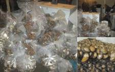 Western Cape police seized abalone valued at several million rand in two separate operations. Picture: @SAPoliceService
