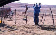 An eyewitness took a photo of a man hanging a dog from a fence in the Eastern Cape. Picture: Supplied.