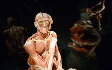 """A full plastinated body of a male person is on display at the """"Menschen Museum"""" (Human Being Museum) by plastinator Gunther von Hagens on the eve of its opening in Berlin, on February 17, 2015. Picture: AFP."""