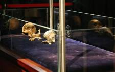 Scientist piece together the skeleton of 'Neo', discovered in the Rising Star cave.  Picture: Christa Eybers/EWN