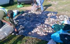 Maitland police seized abalone worth around R2.5 million in Muizenberg on 7 August 2015. Picture: SAPS.