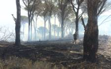 Firefighters and volunteers contained a blaze next to residences in the Schapenberg, Rome Glen area. Picture: Kevin Brandt/EWN
