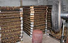 Western Cape police seized abalone worth R17 million in Philippi on 15 October 2015. Picture: Saps.