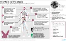 Factfile on how the Ebola virus attacks. Picture: AFP.