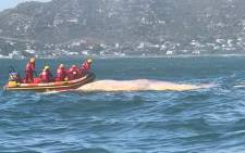 NSRI Hout Bay crew towing the whale carcass to Hout Bay harbour on 25 June 2018 so that City of Cape Town cleansing department can dispose of it. Picture: @NSRI/Twitter