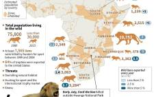 Map of African detailing numbers of lions living in the wild and numbers exported.