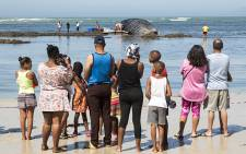Curious beachgoers gathered at Strand beach on 23 December 2015 to get a closer look at a dead humpback whale that washed up overnight. Picture: Aletta Harrison/EWN