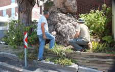 City of Cape Town officials examine a gum tree for poisoning. Picture: Supplied