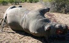 FILE: Finfoot Lake Reserve owner Miles Lappeman inspects a dead rhino. Picture: Taurai Maduna/EWN.