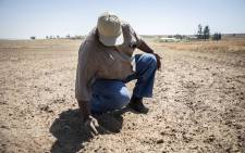 Farmer Richard Mashinini shows his farm in the Free State. Picture: Abigail Javier/EWN